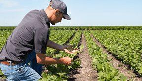 Fermierii, optimişti în privinţa recoltelor din acest an