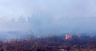 Incendiile de vegetație uscată, în creștere alarmantă
