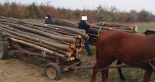 Jandarmii au împărțit amenzi hoților de lemne