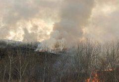 Lizieră cuprinsă de flăcări, la Murgeni