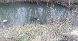 Vasluian, găsit înecat într-un pârâu de pompieri!
