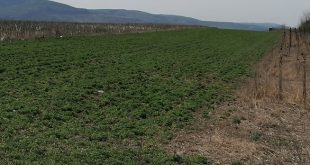 Agricultura vasluiană aproape în colaps din cauza secetei
