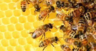 Peste 1,3 milioane de lei au primit apicultorii vasluieni drept ajutor de minimis