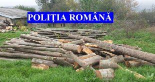 Percheziții la hoții de lemne din trei comune vasluiene