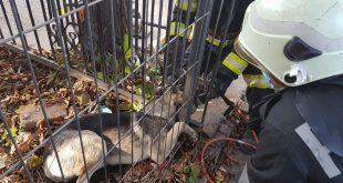 Câine salvat de pompieri la Bârlad