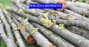 Un nemțean prins la furat lemne din pădurile din jurul Negreștiului