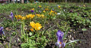 Grădina Publică Bârlad transformată grădină cu flori!